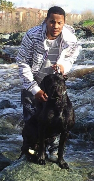 Remy Martin the Cane Corso is standing on a rock in the rapids with a person behind it. There is water rushing off of all the rocks