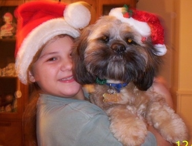 Max the Cock-A-Tzu in the arms of his smiling owner. They both are wearing santa clause hats