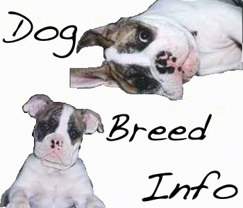 A logo that reads - Dog Breed Info - it has two pictures of Spike the Bulldog as a puppy on it.