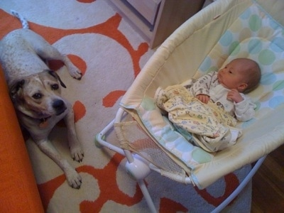 Top down view of a sleeping Baby in a cradle next to a dog who is laying on an orange and white rug