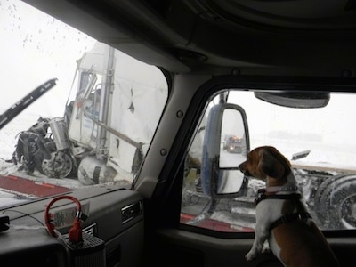 Sissy the tan, black and white Doxle is in the passenger seat of a tractor-trailer. Outside of the window is a destroyed tractor-trailer that crashed in the snow