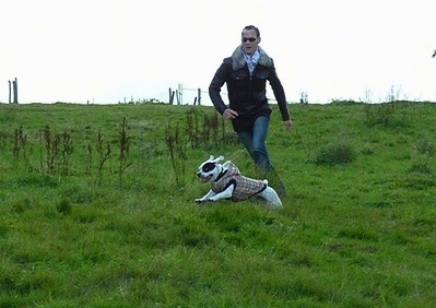 Sita the French Bulloxer is wearing a brown plaid hooded jacket while running across a field with a person running along side him