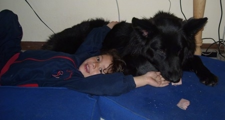 A black German Shepherd is laying above a little girl who is laying on blue pillows on the floor on her back. The girl is reaching up to pet the dog and smiling as the dog chews on a bone.