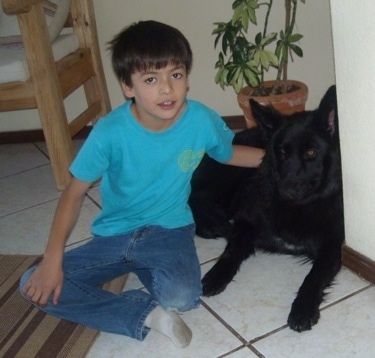 A boy in a teal-blue shirt has its arm over the back of a black German Shepherd on a white tiled floor in a kitchen with wooden chair on the left and a potted plant right behind them.