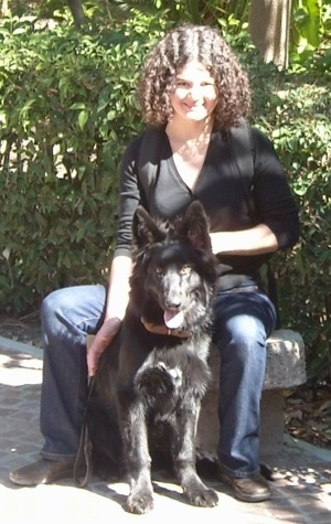 A lady in a black shirt is sitting on a concrete seat outside and a black German Shepherd is sitting in between her legs. There are green bushes behind them.