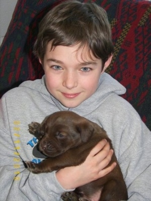 A small chocolate Labrador mix puppy is being held in the arms of a smiling boy who is wearing a gray sweatshirt.