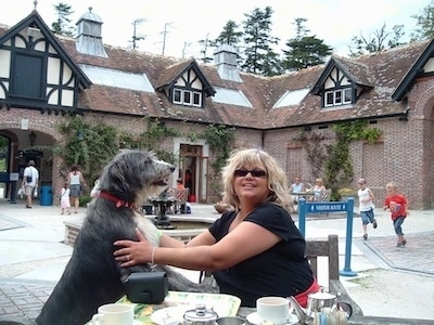 A black with white Old Deerhound Sheepdog is outside jumped up with its front paws on the lap of a lady who is sitting at a table at an outdoor restaurant. The lady is looking forward and the dog is looking at the lady.
