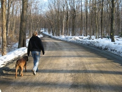 Walking your dog off Leash