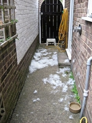 An Alleyway between two houses and there is thick white dog hair all over the concrete surface.