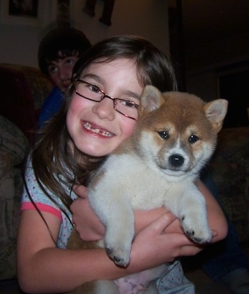 A small girl wearing reading glasses is hugging a fluffy, thick coated, brown and white Shiba Inu puppy. There is a person sitting on a couch behind them. The dog has small perk ears and a thick body.