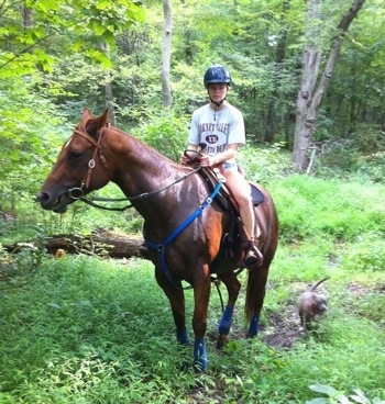 A girl is riding a horse in the woods and a blue-nose brindle Pit Bull Terrier puppy is walking with them.