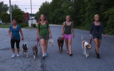 Four ladies are leading four dogs on a walk down the middle of a street at night.