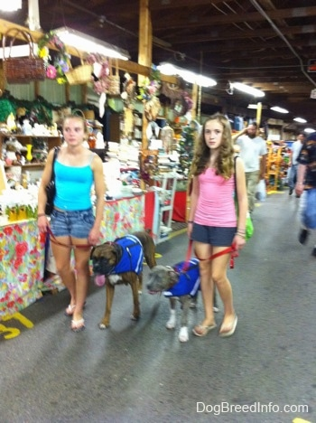 A girl in blue and a girl in pink are leading a dog and a puppy through a flea market.