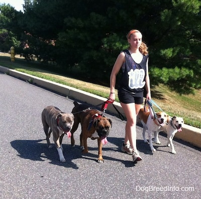A girl in an Illadelphia tank shirt is leading four dogs on a walk down a street.