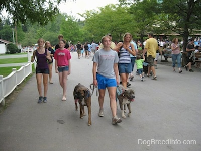 A girl in a grey shirt is leading two dogs on a walk across a park. There are people walking all around them.