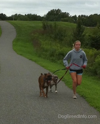 A blonde-haired girl is leading a blue-nose brindle Pit Bull Terrier puppy and a brown brindle Boxer on a run down a walkway.