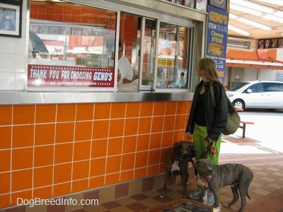 A lady in green pants is holding the leash of a brown with black and white Boxer and a blue-nose brindle Pit Bull Terrier puppy. The lady is ordering at a window at Geno's Steaks.