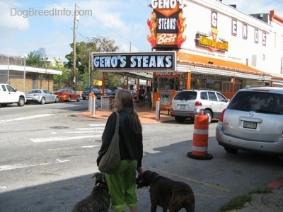 A lady in green pants is leading two dogs on a walk to Geno's Steaks in Philadelphia. They are about to cross the street.