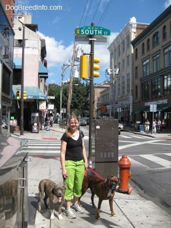 A lady in green pants and a brown with black and white Boxer and a blue-nose brindle Pit Bull Terrier puppy are standing under a south st. sign in Philadelphia, pa.