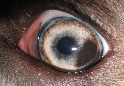Black Spot On Eye