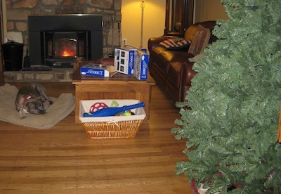 A blue-nose brindle Pit Bull Terrier is laying in a dog bed next to a lit fireplace and he is looking across a room at a Christmas tree.