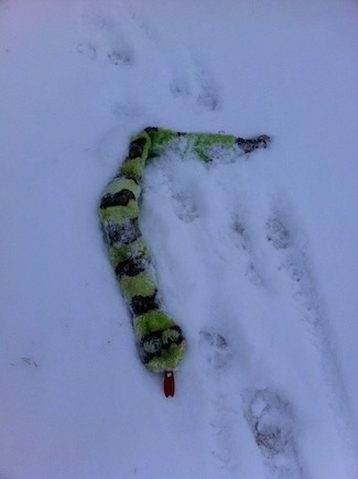 Close up - A squeaky green snake dog toy that is on the ground buried in snow.