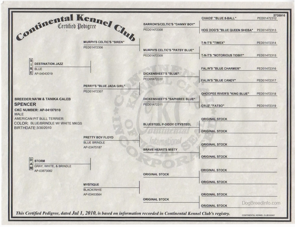 A Continental Kennel Club Pedigree Certificate.