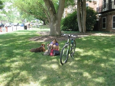 There is a bike in grass next to a girl in green who is kneeling down to play with a blue-nose brindle Pit Bull Terrier puppy. Laying next to them is a brown brindle Boxer. They are in the front yard of brick dorms at the Penn State campus.