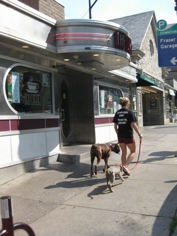 A girl in black is leading a blue-nose brindle Pit Bull Terrier puppy and a blue-nose brindle Pit Bull Terrier puppy on a walk past a diner on the streets of State College.