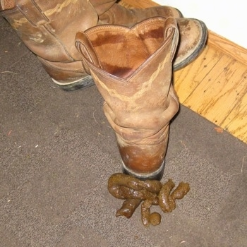 A pile of poop behind a brown leather cow girl boot on a brown throw rug.