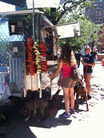 A blue-nose brindle Pit Bull Terrier puppy is sniffing under a street food vendor. There is a girl in a pink shirt holding his leash. There is a girl in a blue shirt holding the leash of a brown brindle Boxer.