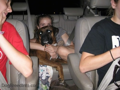 A brown with black and white Boxer is laying across a seat in the back seat of a Toyota Sienna minivan and a girl in a grey shirt has her arms wrapped around him.