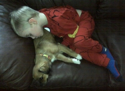 A boy in red pajamas is sleeping across a couch and over top of a brown with white Tibetan Chin puppy that is laying down on the couch.