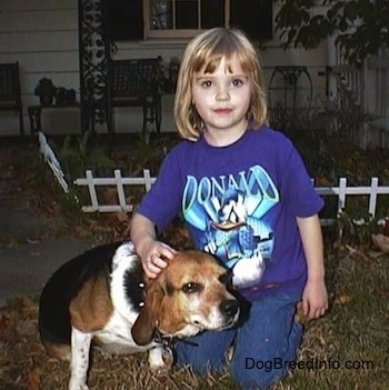 A little girl wearing a Donald Duck shirt kneeling down outside with Frank the Beagle