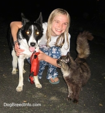 Lucy the Border Collie at 3 years old with Amie and Blizzard