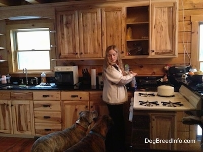 Spencer the Pit Bull Terrier and Bruno the Boxer in a kitchen looking up at Sara waiting to get a treat