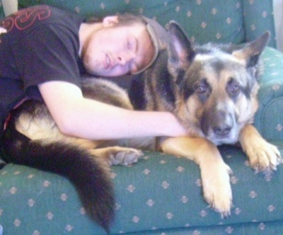 A man is sleeping on the back of a black and tan German Shepherd that is laying on a chair