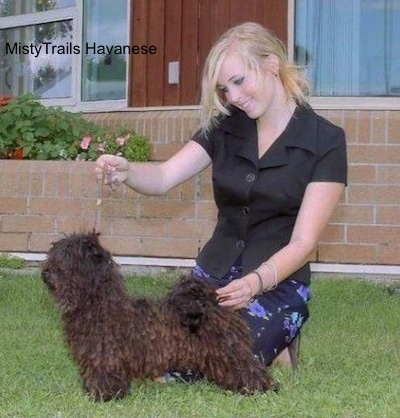 A corded Havanese is being posed by a blonde haired lady in front of a brick building.