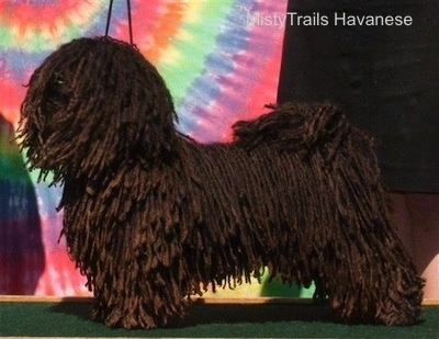 A corded Havanese is standing in a stack pose on a stand in front of a tye dye canvas