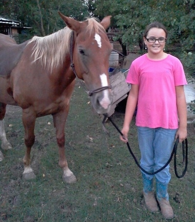 Faith the Quarter horse at 8 years old