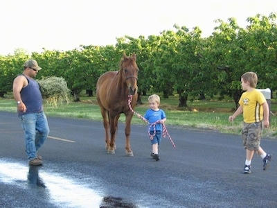 A small blonde haired boy is walking down a road leading a horse. There is another older blonde haired boy watching. There is a man with a pile of hay in his arms watching the boy lead the horse.