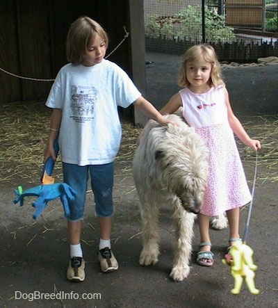 A blonde haired girl and a girl in a pink dress are petting a white with tan Irish Wolfhound. The kids are holding toys.