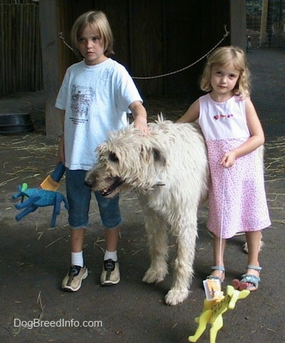 A white with tan Irish Wolfhound has a kid on each side of it, a blonde haired girl in blue and a girl in a pink dress