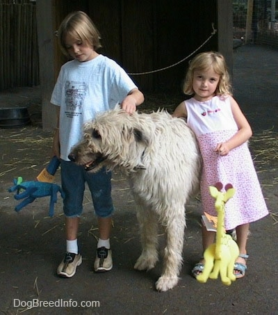 A blonde haired girl dressed in blue and a girl in a pink dress are petting a white with tan Irish Wolfhound. Its mouth is open and it is looking to the left. The kids rae holding toys.