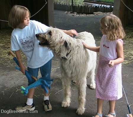 A blonde haired girl and the white with tan Irish Wolfhound are looking at each other face to face. There is a girl in a pink dress petting the dog