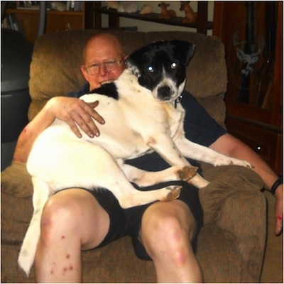 A large, short-haired, white with black mixed breed dog is laying in the lap of a smiling man in a recliner chair.