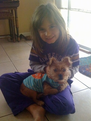 A tan Papigriffon puppy is wearing a blue shirt with an orange peace symbol on the back laying in a little girls lap who is dressed in purple. The kid is smiling and the puppy is looking forward. They are on a tan tiled floor in front of a sunny window.