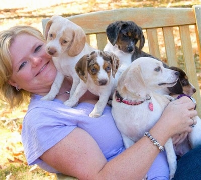 A blonde-haired lady in a purple shirt is laying in a wooden chair and there is a pack of Queen Elizabeth Pocket Beagles on top of her.