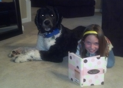 Side view - A shaved black with white Saint Berdoodle dog is laying across a carpet and in front of it is a smiling girl reading a book.