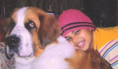 Leo the Saint Bernard at 2 years old with his happy owner in India